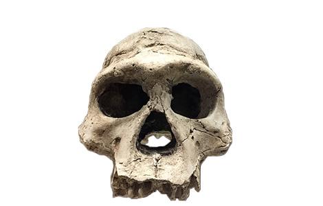 homo erectus laguna knjige
